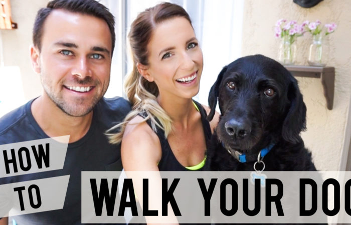 Dog Walking Tips (Funny Video)